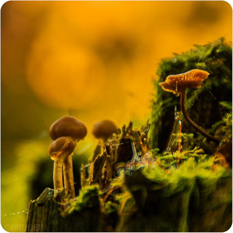 kleine pilzwelt_2