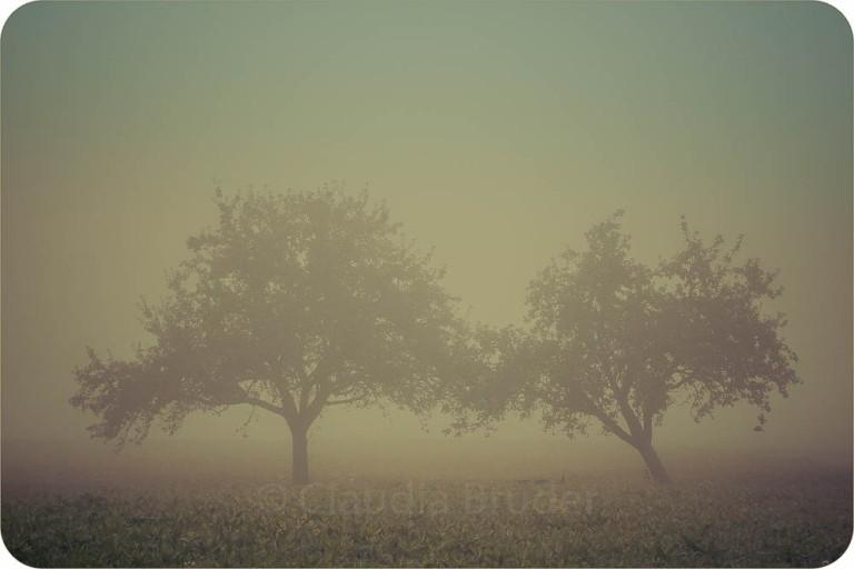 zwei bäume im nebel_1