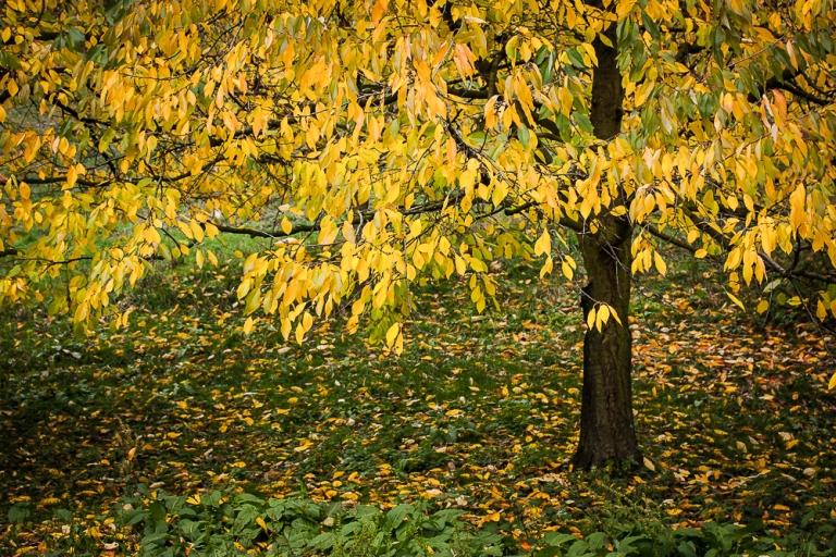 temporary_autumn leaves