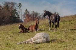story_horses-2